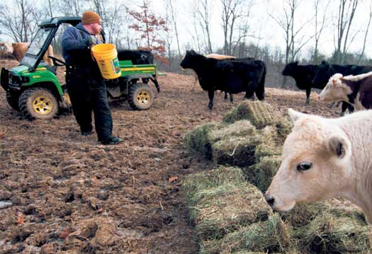 George Hieneman feeds his young heifers that are due to calve in the spring.
