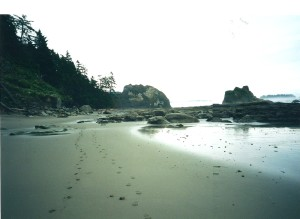 Olympic National Park's wilderness seashore is 75 miles long and is located on the northern coast of Washington State's Olympic Peninsula. (Carrie Stambaugh)