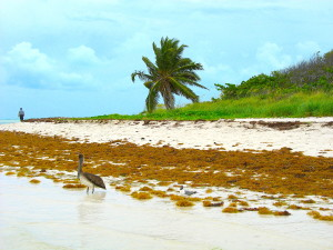 Bahia Honda State Park offers peaceful stretches of protected beach in the Florida Keys. (Carrie Stambaugh)
